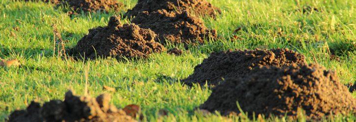 Im Video: 10 Dinge, die du nicht tun solltest wenn du Maulwürfe im Garten hast